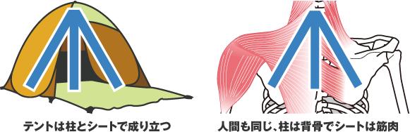 人間の体はテントと同様に筋肉と骨格で成り立つ